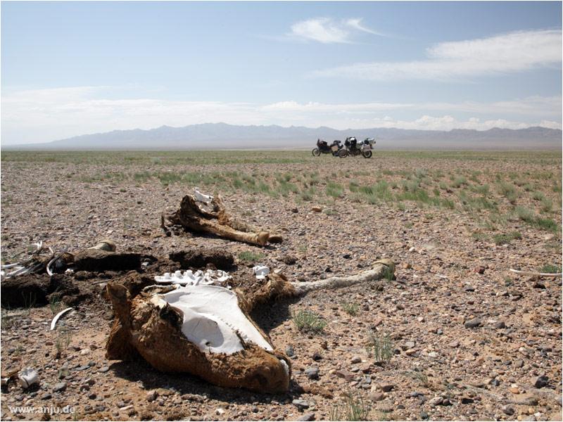 unterwegs in der Altai-Gobi/Mongolei