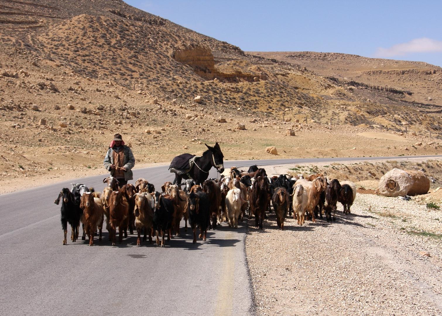 Unterwegs in Jordanien