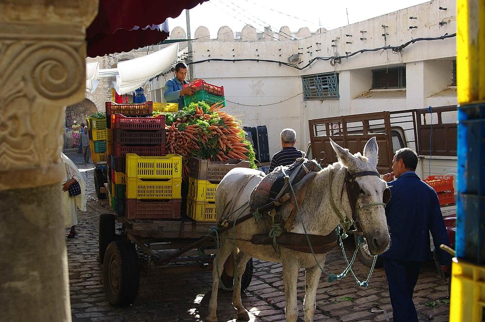 Unterwegs in Tunesien (Bild 07)