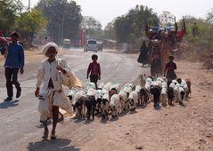 ...unterwegs mit der ganzen Habe...(auf 3 Kamelen)