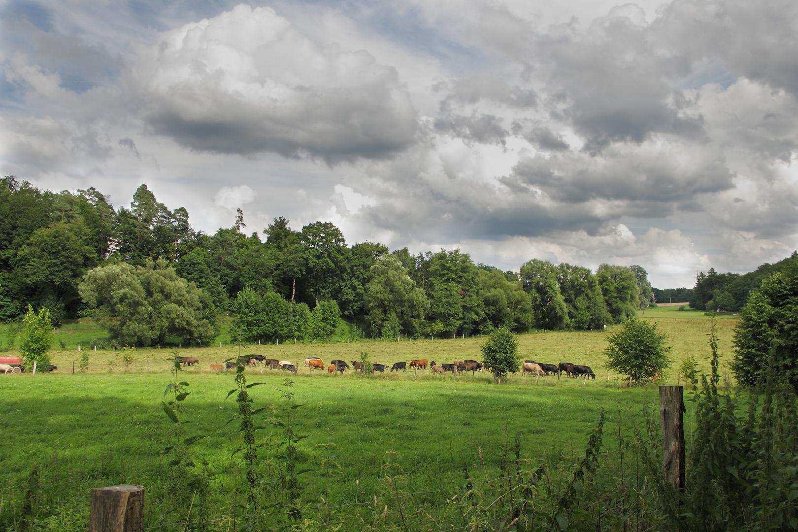 Unterwegs mit  Fahrrad zwischen Holzgerlingen und Ehningen