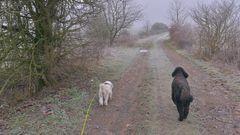 unterwegs mit Wicky-Emily und Ronja (paseando con Wicky-Emily y Roña)