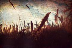Untitled Image 5.0