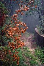 Un'umida mattina d'autunno