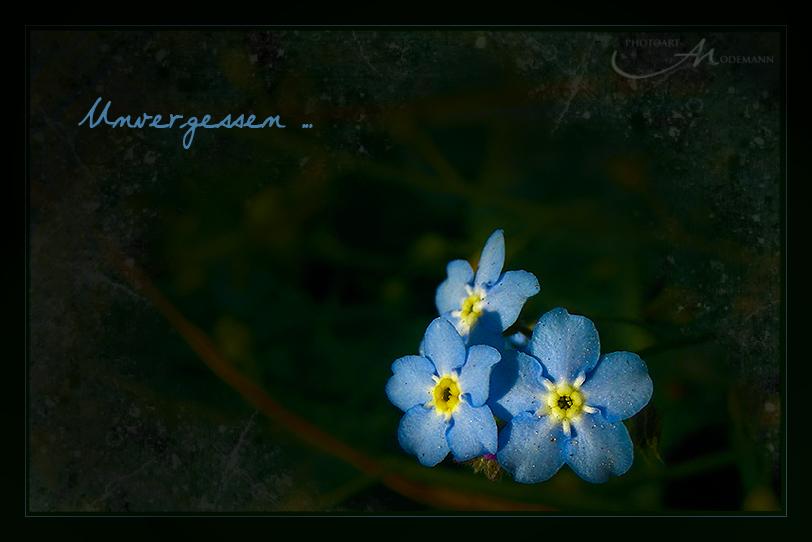 ~ Unvergessen ~
