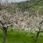 Unverkennbar der Frühling