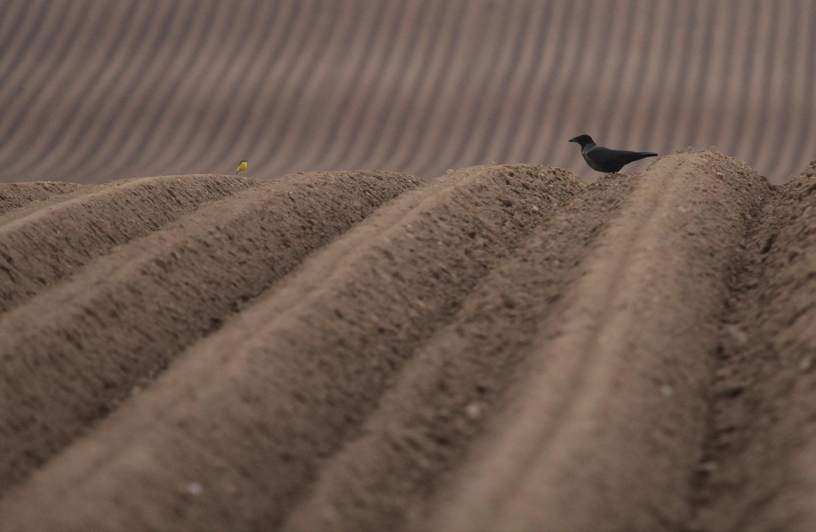 unvorhergesehenes Treffen in der Wüste
