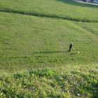 Uomo con cane per i prati di Lucca