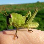 Uomo ed insetto