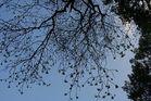 Upside down tree-part 1