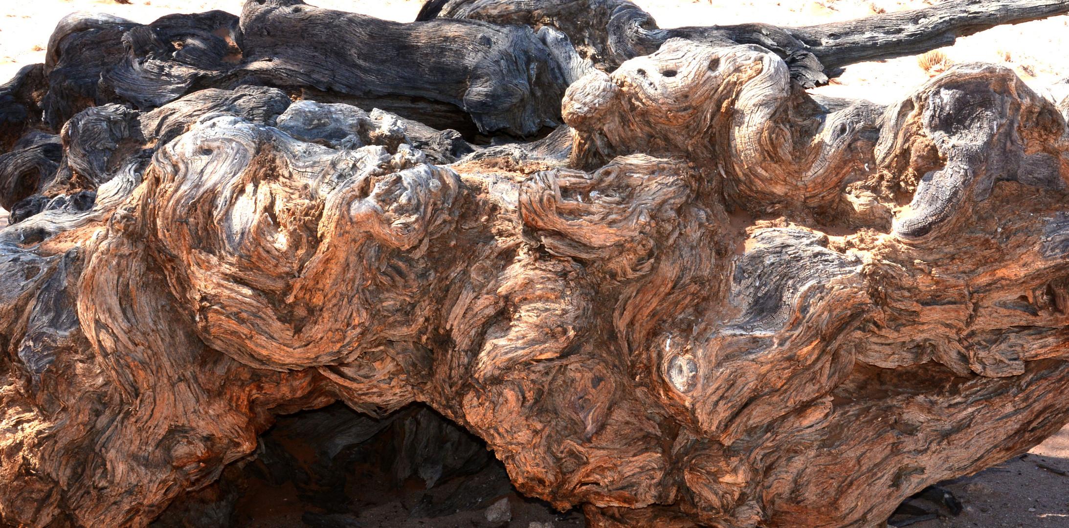 Uralter  Baumstamm in der Namib