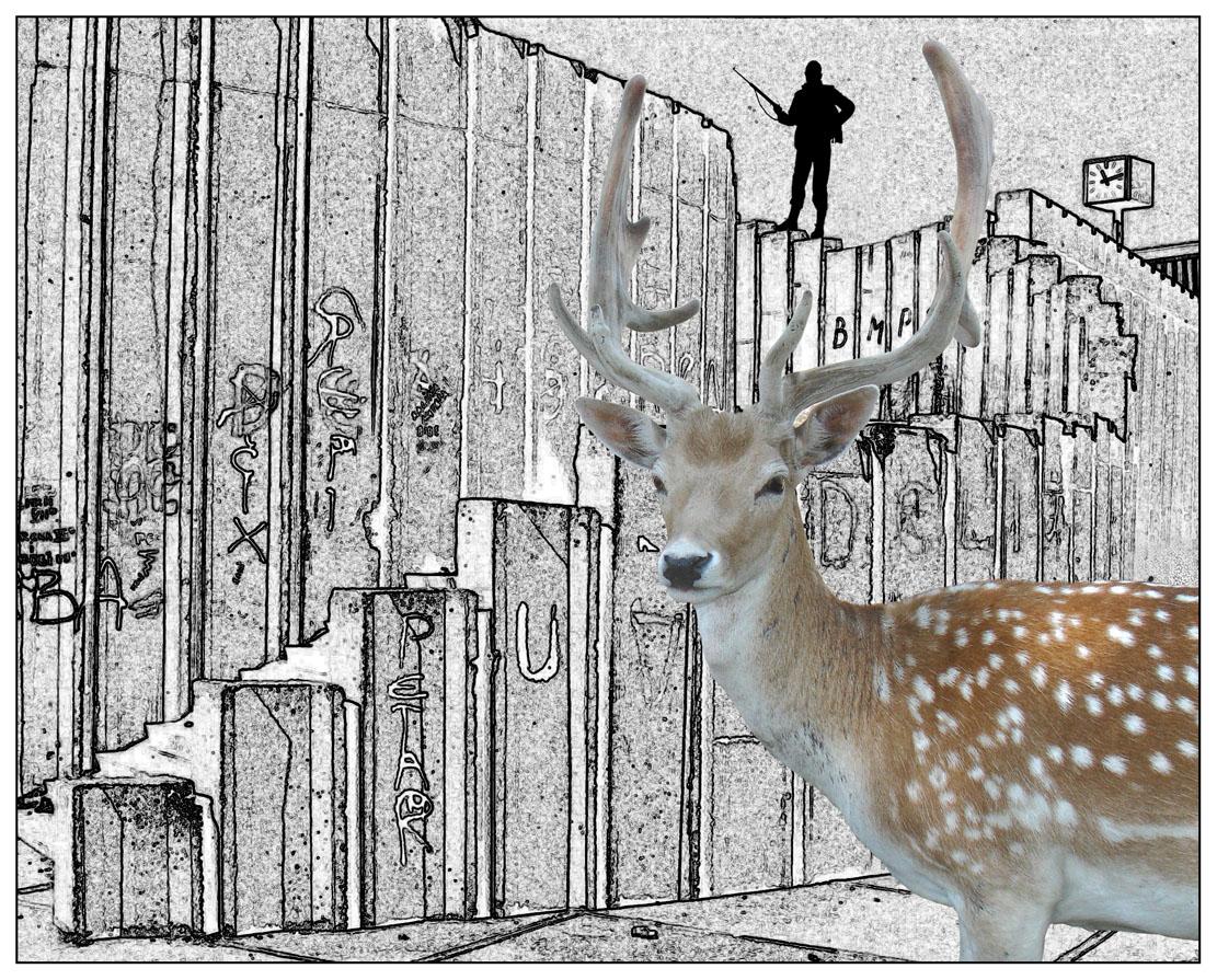 Urban Deer Hunter