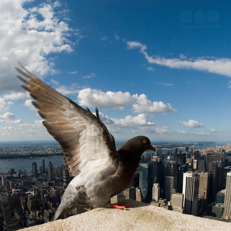 Urbane Freiheit