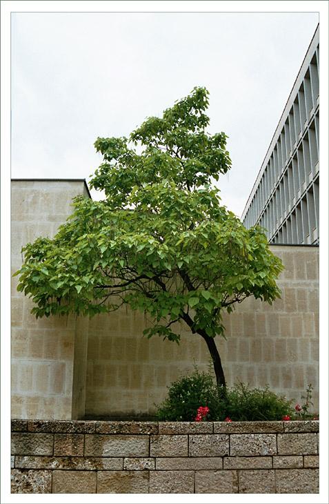 Urbane Vegetation 3