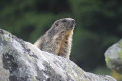 Urlaub in Graubünden Sedrun 2012