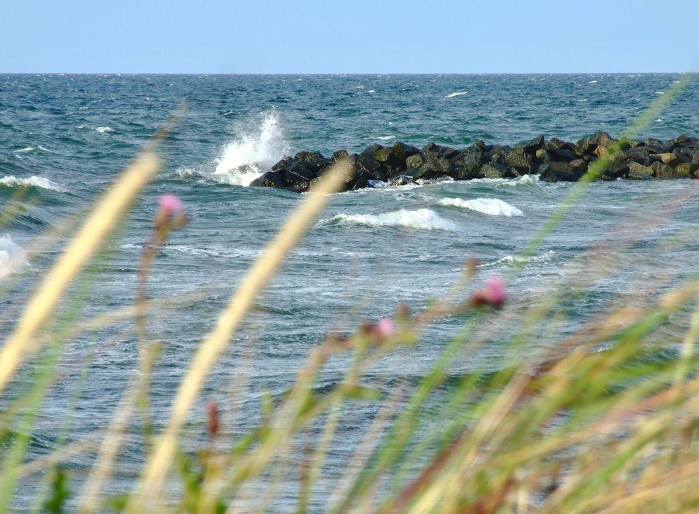 Urlaub in Kalifornien (Ostseeküste)