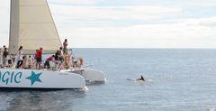 Urlauber schauen spannend den Delfinen zu