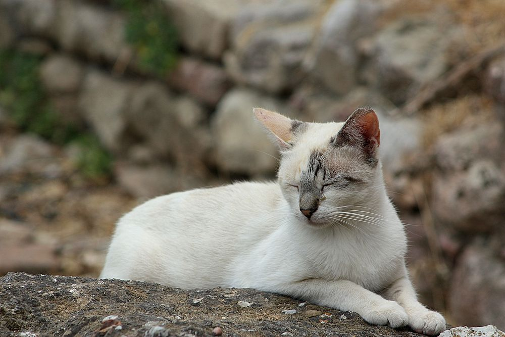 Urlaubs Katze