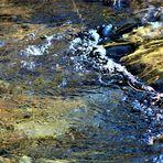 ursprüngliche Natur rund um die schwäbische Alb