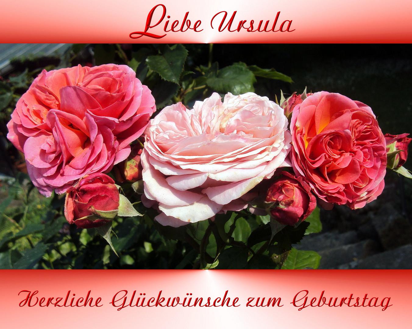 Ursula Hat Geburtstag Foto Bild Spezial Geburtstag Gratulation
