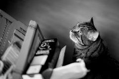 Ursus hilft beim Altpapier-Entsorgen...