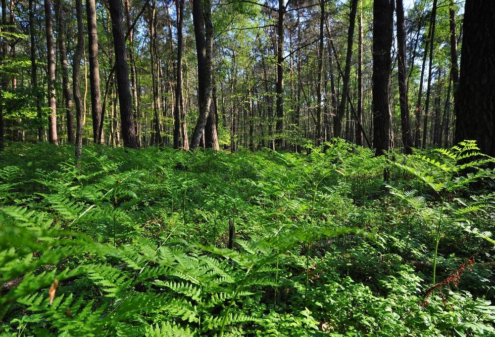 """""""urwald"""" foto  bild  landschaft wald bäume und"""
