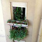 Urwald am Fenster