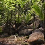 Urwald der Seychelleninsel Silhuette