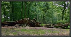 (Ur)Wald *Hasbruch*