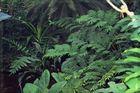 Urwald im Botanischen Garten