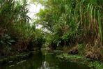 Urwald in Costa Rica