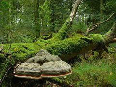 Urwald in den Fröruper Bergen