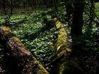 Urwald in Hessen