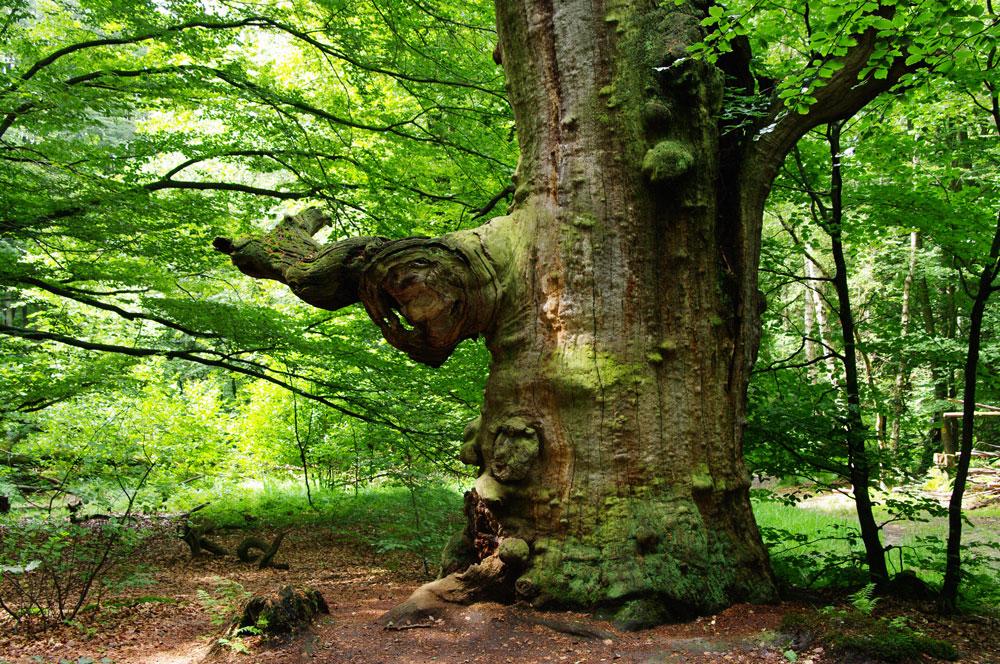urwald in hessen foto  bild  landschaft wald salena