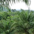 Urwald in Malaysia