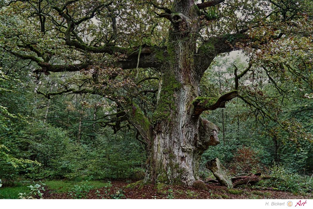 urwald sababurg 08 foto  bild  landschaft natur bilder