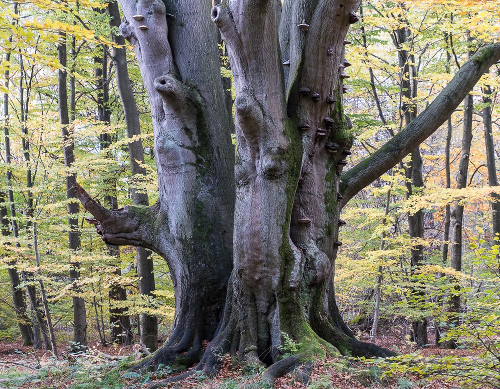 urwald sababurg v foto  bild  deutschland europe