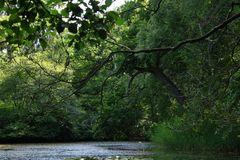 Urwaldfeeling im alten Park