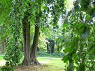 urwaldstimmung im park