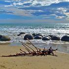 """""""Urzeitechse"""" am Strand der Moeraki Boulders"""