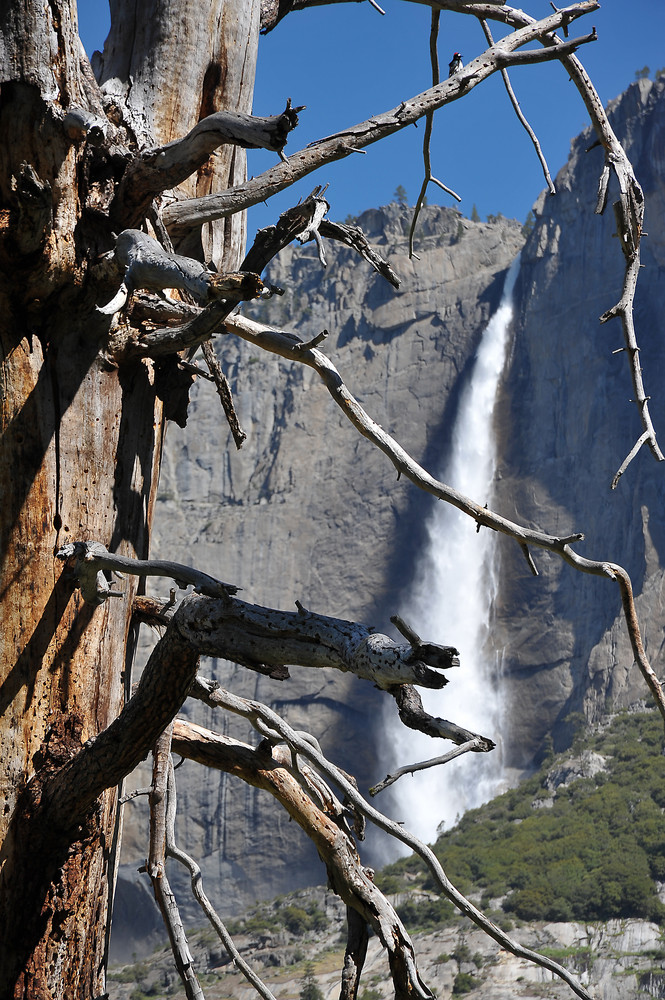 USA 2009 / Yosemite Nationalpark