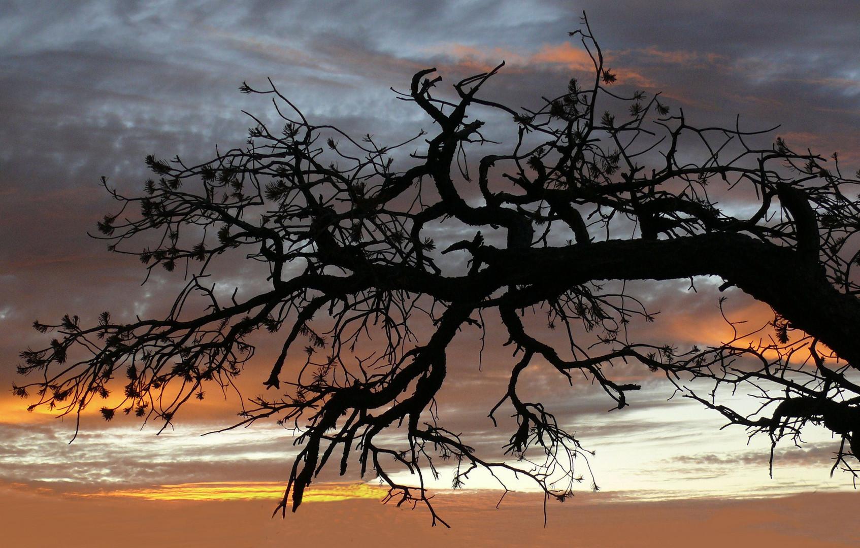 USA 2011 - Sonnenuntergang im Herbst