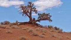 USA 2018 - Monument Valley (4) - Die Trockenheit hinterläßt Spuren