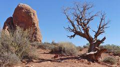 USA 2018 - Monument Valley (5) - Die Trockenheit hinterläßt Spuren