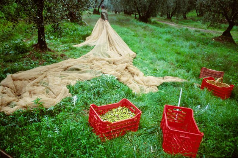 Utensilien einer Olivenernte