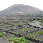 Uvas en el  volcan