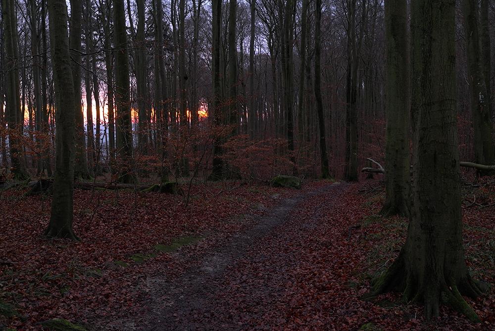 Uwe allein im Wald