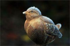... v V ... verfrorener Vogel