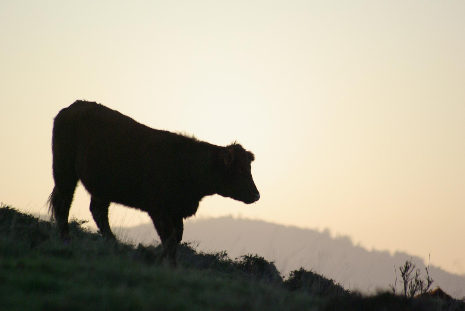 Vache - Grendelbruch