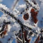 Väterchen Frost zeigt seine Blüten